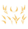 golden natural wheat ears icons logo set vector image