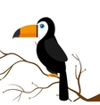 toucan parrot brazil on branch vector image vector image