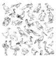 wild birds zoo set hand-drawn vector image