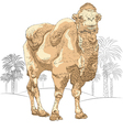 Bactrian camel smiling vector image