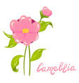 cartoon camellia flower vector image vector image
