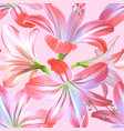 realistic pink flowers - hippeastrum or amaryllis vector image