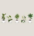 room plant set isolated on light background vector image
