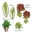 salads and leafy vegetables icons set vector image vector image