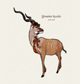 greater kudu antelope hand drawn vector image