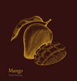 mango hand drawing engraving style vector image vector image
