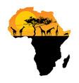 map africa safari sunset with giraffe group