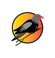 simple color bird logo design vector image vector image