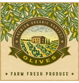 Vintage colorful olive harvest label vector image