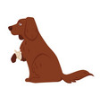 pet dog with wounded or broken paw in bandage vector image vector image