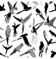 seamless pattern with parrot black and white vector image