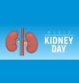 world kidney day healthy concept background vector image vector image