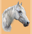 colorful horse portrait-6 vector image