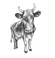 Cow - domestic animal farm hand drawn