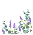 eucaliptus and lavender elements design template vector image vector image