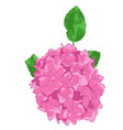 drawing of pink hydrangea in white backgrou vector image vector image
