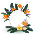plumeria and strelitzia reginae flowers vector image