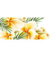 plumeria yellow flowers watercolor summer vector image vector image