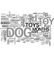 what s the best dog toy for your adult dog text vector image vector image