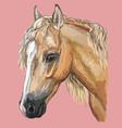 colorful horse portrait-8 vector image vector image