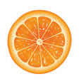 orange slice isolated on white background vector image vector image