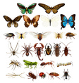 Wild insects in various types vector image