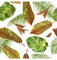 tropial leaves pattern vector image
