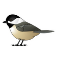 Chickadee vector image