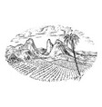 coffee field cocoa plantation vintage landscape vector image