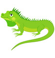 cute green iguana isolated on white background fl vector image