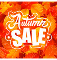 lettering of autumn sale text and fall leaves vector image vector image