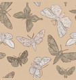 background with hand drawn moth vector image vector image