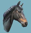 colorful horse portrait-10 vector image vector image