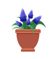 muscari room flower plant vector image