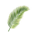 palm leaf isolated white background vector image vector image