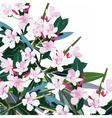 Pink flowers bouquet vector image
