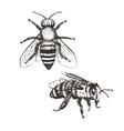 Bee vintage set vector image