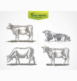 Cows in graphic style a set four images