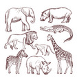 different animals of savana and africa vector image