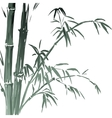 watercolor bamboo branches isolated on the white