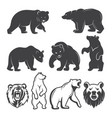 bears animals set vector image vector image