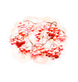 bunch rowan berries from splash watercolors vector image vector image