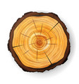 cross section tree wooden stump round cut vector image