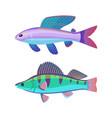 rare aquarium wrasse specie colorful vector image