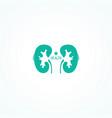 human kidneys symbol vector image