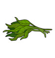 Color vegetables water spinach