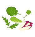 healthy organic salad leaves cartoon isolated vector image vector image