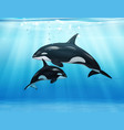 killer whale in sea realistic composition vector image vector image