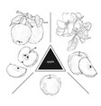 set of fruits whole apples half apple and a slice vector image