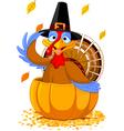 Thanksgiving Turkey in the pumpkin